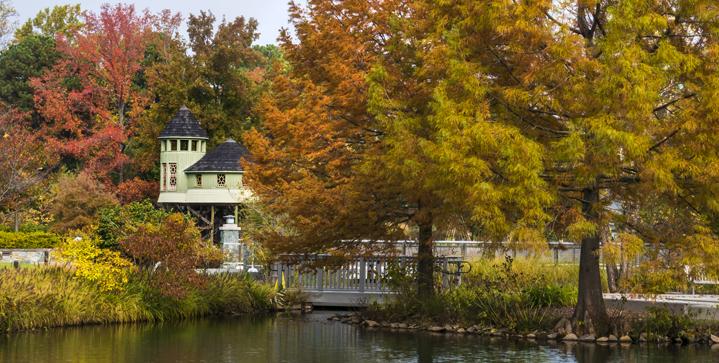 Tree House Fall Don Williamson_1250x420