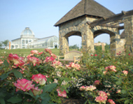A view of the Rose Garden and the Conservatory at Lewis Ginter Botanical Garden.