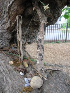 My son's fairy house in the mulberry tree.