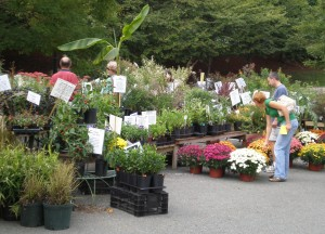Fall Plant Sale Image