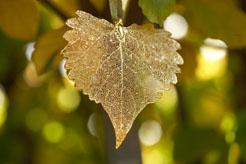 Leaf Ornament for website