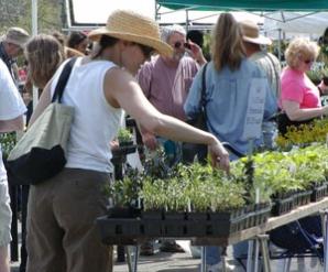 Lewis Ginter Botanical Garden Plant Sale