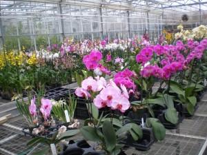 800 Orchids