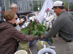 Terry Tosh & Shelly Arthur work with Tom Brinda to pot orchids for Splendor Under Glass