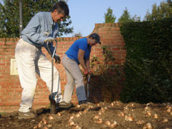 Planting Bulbs Web
