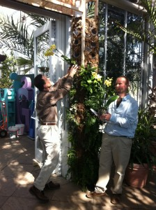 Director of Horticulture, Tom Brinda, and Chris prepare the orchid arch