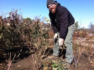 Lewis Ginter Botanical Garden Rose Gardener Jay Austin