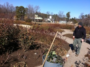 Jay Austin working the rose beds