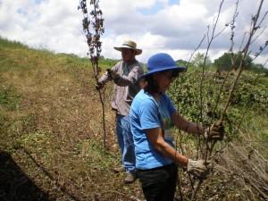 Lisa & Chris stripping saplings for Meadowmorphosis