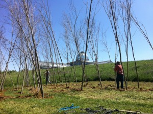 All in a day's work. The structure starts to take form, and confused visitors ask why we are planting trees that have no roots.