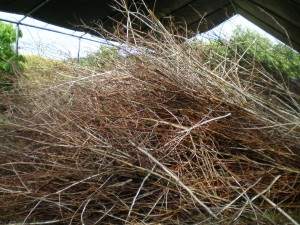 Sticks, ready to be incorporated into the sculpture.