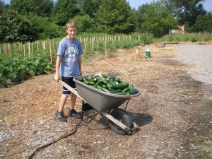 A Community Kitchen Garden volunteer pushes a load of just-harvested zucchini.