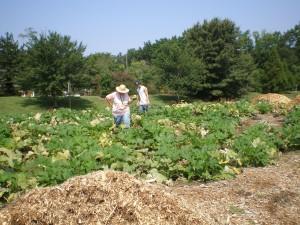 Volunteers in the Community Kitchen Garden