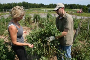 Joy Cook & Roger Levesque rassle the wind-blown tomato vines back onto the stakes.