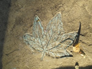 Flagstone leaf imprint at Lewis Ginter Botanical Garden