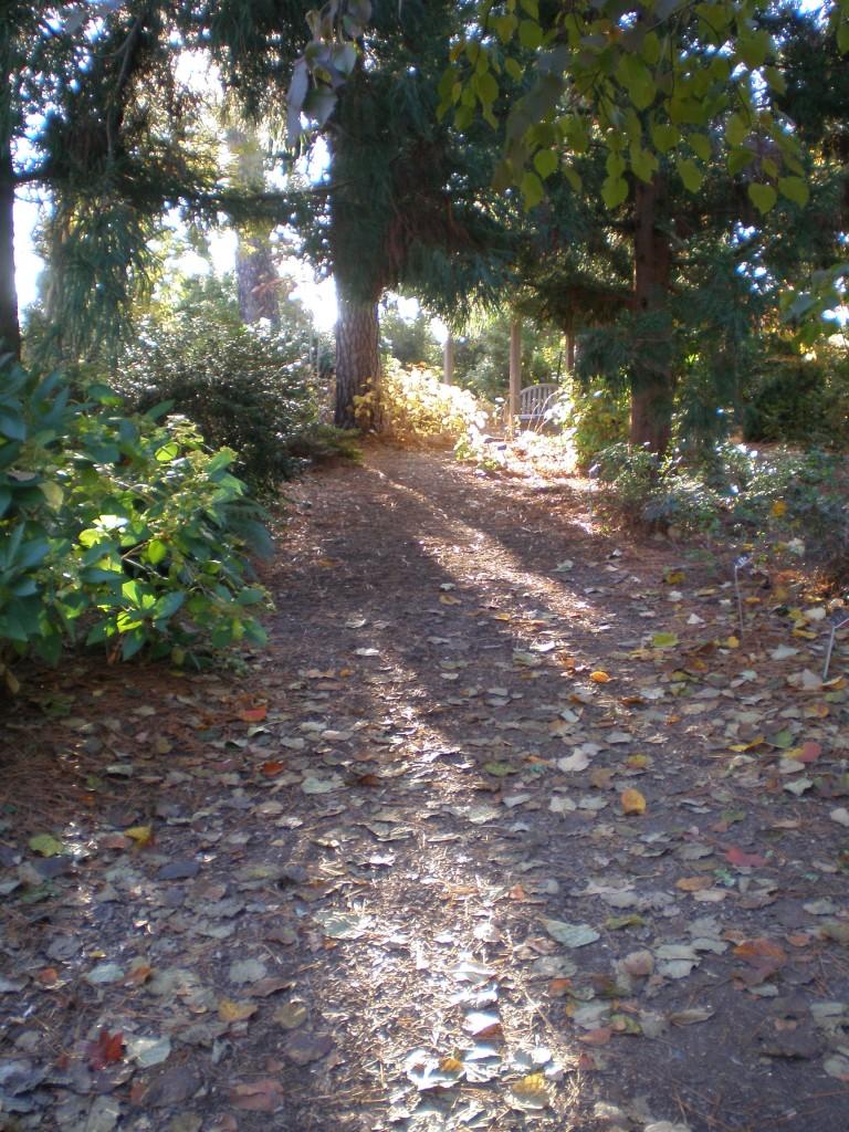Lucy Payne Minor Garden path at Lewis Ginter Botanical Garden