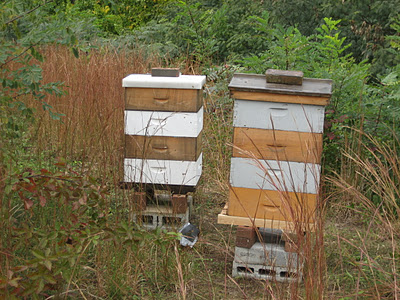 Hives in their new home at Lewis Ginter Botanical Garden.