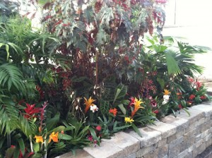 Central and South American bed -- Cattleyas accompanied by lots of Bromeliads and other tropicals.