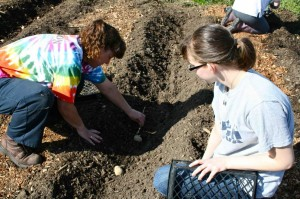 BobbiJo Jackson and her daughter Carly Tignor place the Red Pontiac seed potato cuttings in the furrows.