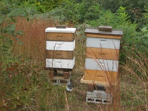 Bee hives at Lewis Ginter Botanical Garden, photo by Grace Chapmann