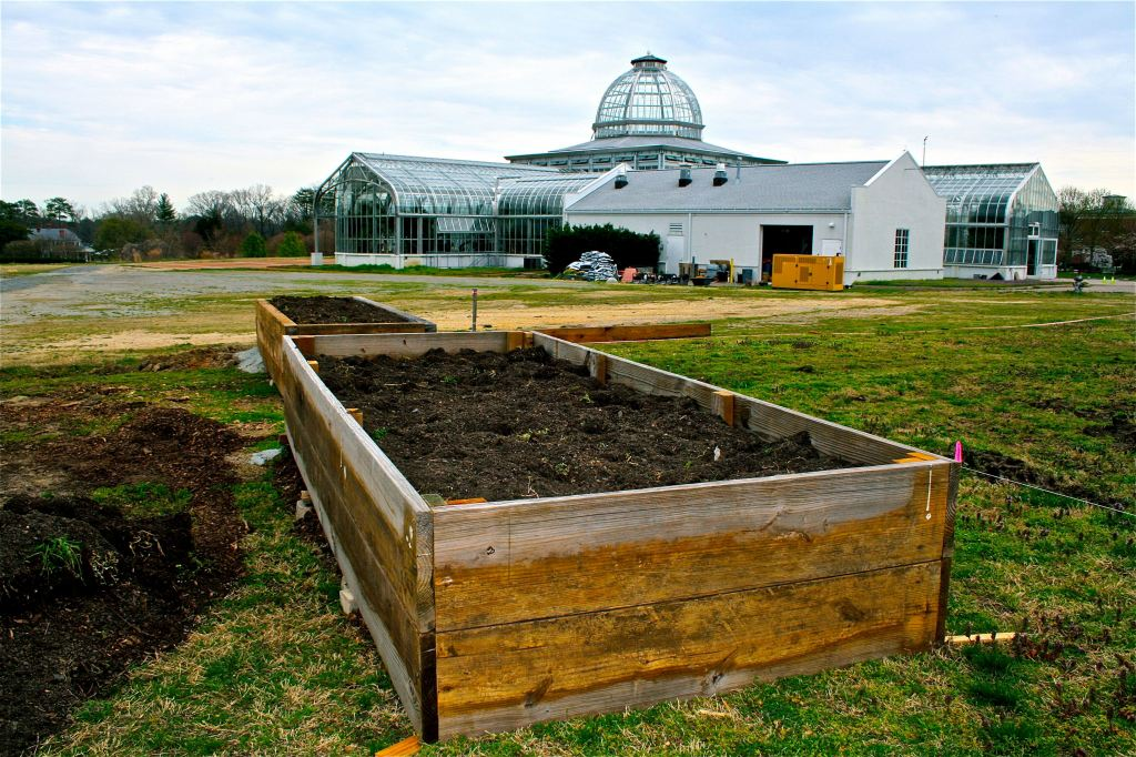 These first two beds were constructed with scrap lumber. Our plan includes at least four more raised beds, creating a substantial opportunity for wheelchair gardeners.