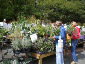 Shoppers selecting plants for their spring beds.