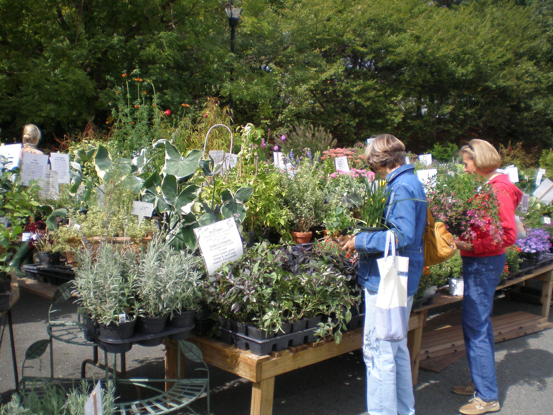 Beautiful Garden Plants for Sale