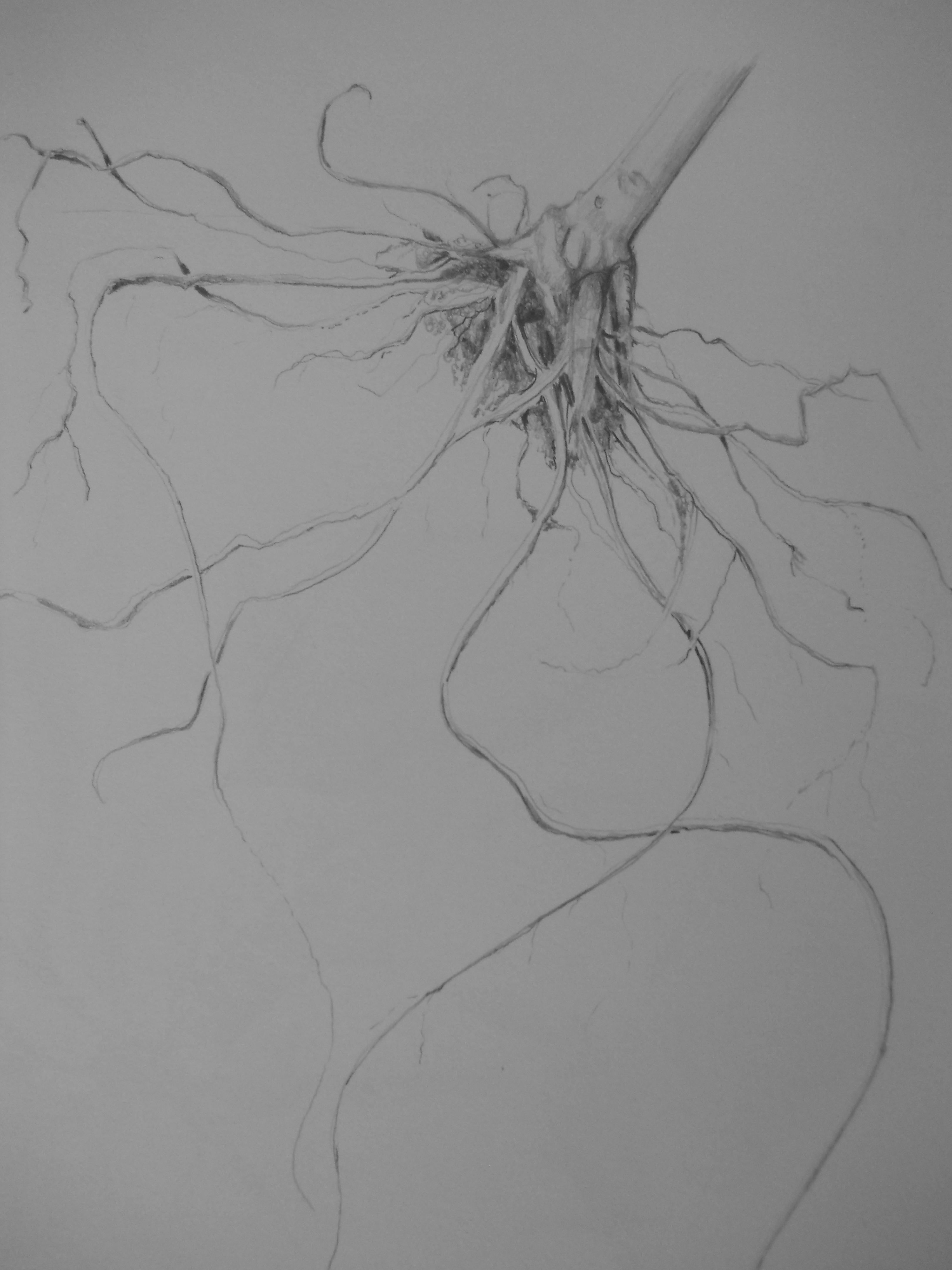Botanical Illustration And The Slow Art Movement Lewis