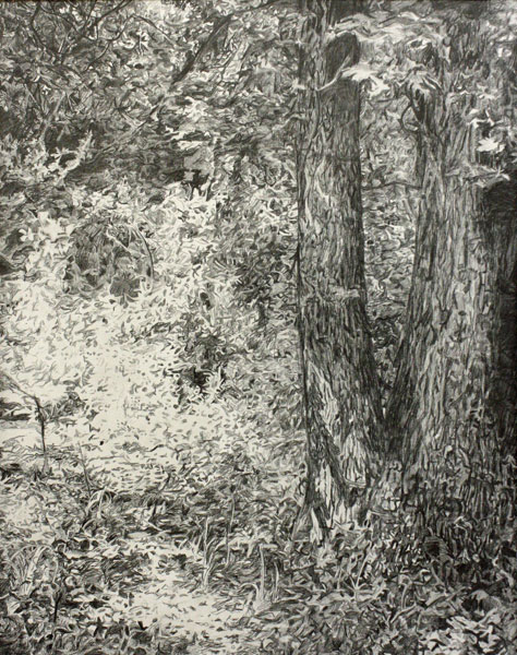 "Reprinted with permission of alliance for young artists & writers.  Mary-Lincoln ""Hermitage-Woods"""