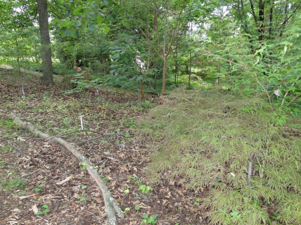 Before shot of a trial bed in the Woodland Area behind the Children's Garden