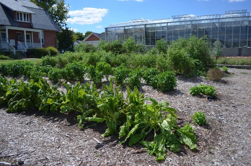 Community Kitchen Garden at Lewis Ginter