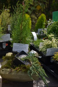 A few of the miniature plants.
