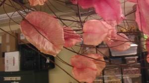 Chinese Lantern seedpods