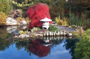 The Asian Valley at Lewis Ginter Botanical Garden. A Japanese Maple in orange. photo by Don Williamson Photography