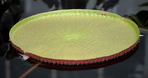 lily pads photo by Don Williamson