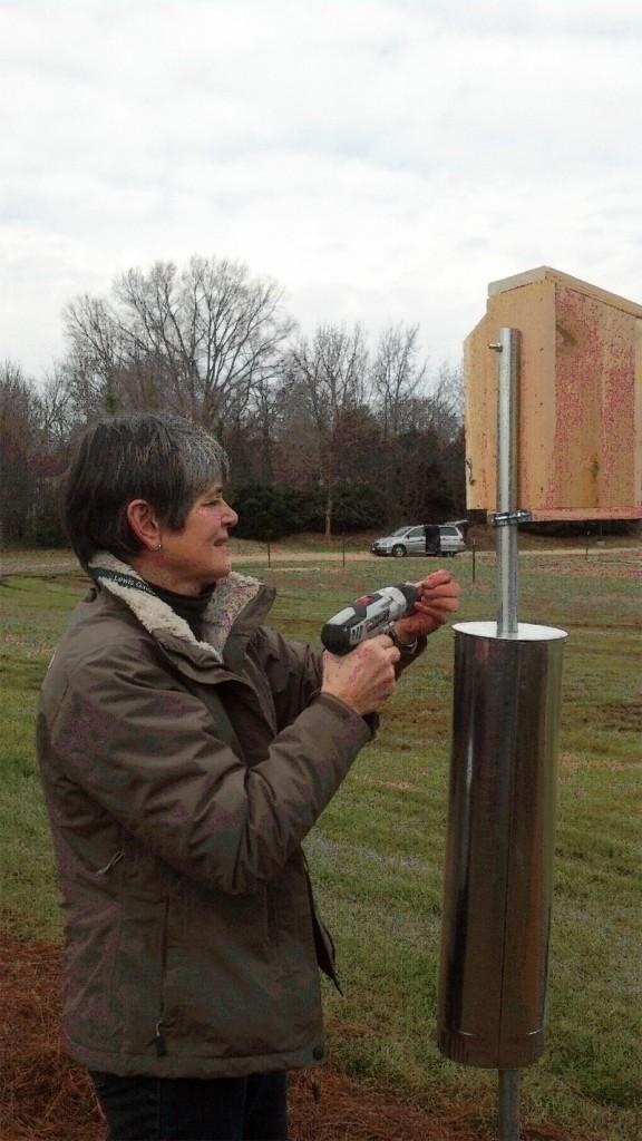 Garden volunteer Linda Chaney installing a bluebird box
