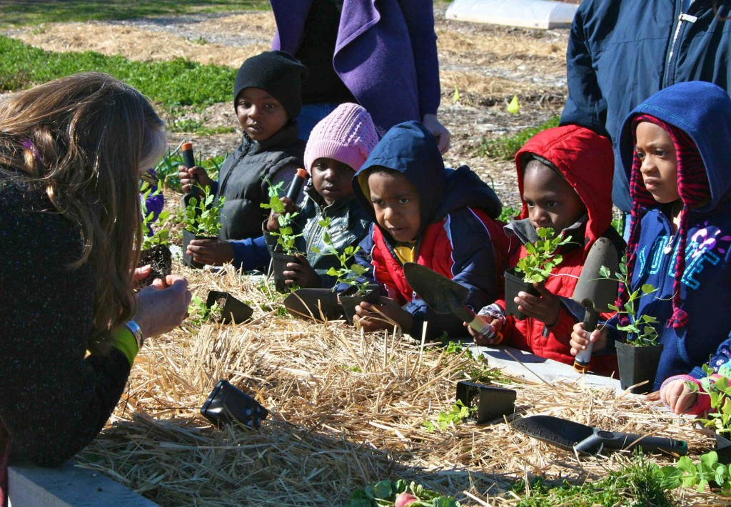 Complete concentration on the children's faces as they  learned how to plant peas. Photo by Brian Vick
