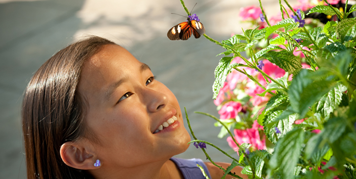 Butterflies LIVE! returns to the North Wing of the Conservatory on May 24. Photo by Stephanie Gross