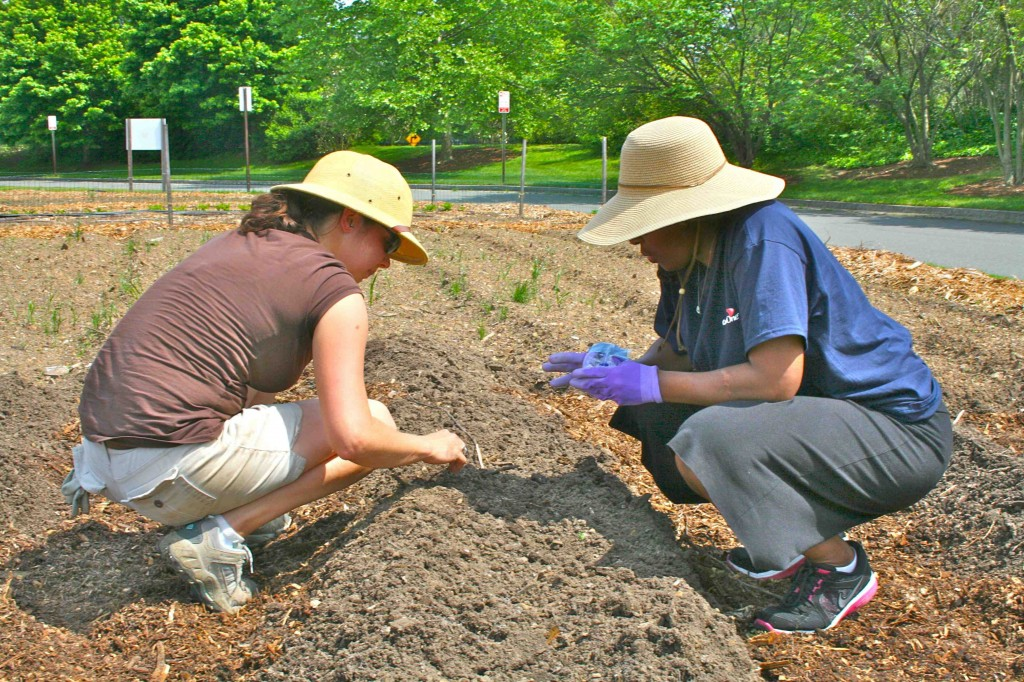 Lewis Ginter gardener Laura Schumm plants Gold Rush zucchini seed with a member of the Capital One team. They demonstrate style and wisdom in their choice of gardening hats.