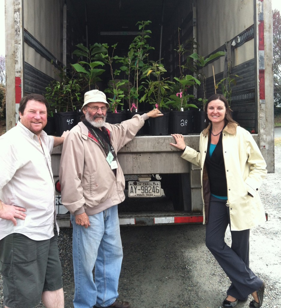 "'Ginter Spicy White' magnolia was hybridized at Lewis Ginter Botanical Garden by ""Magnolia Man"" Bill Smith. Lewis Ginter Botanical Garden Volunteer & hybridizer Bill Smith (center) loads up his magnolia seedlings for delivery to regional test sites, assisted by his son Hunter Smith and Director of Horticulture Grace Chapman."