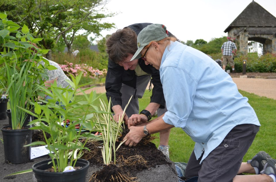 Lewis Ginter Botanical Garden volunteers Sherry Giese and Daune Poklis work together to divide plants & push them into holes in the island.