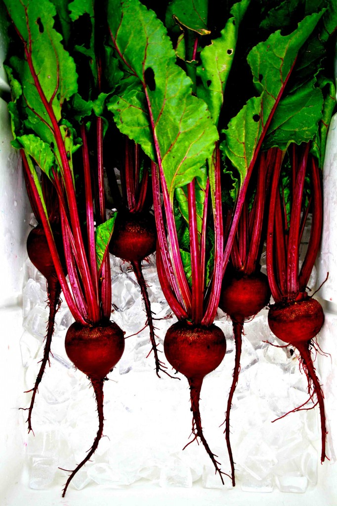 Beet bonanza. These beets were grown from seed obtained from the Thomas Jefferson Center for Historic Plants. Variety: Early Blood Turnip Root (Betas vulgaris, family Amaranthaceae).