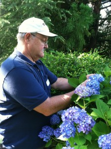 Dr. Henry Schreiber samples color intensity of 12-15 sepals per Hydrangea plant