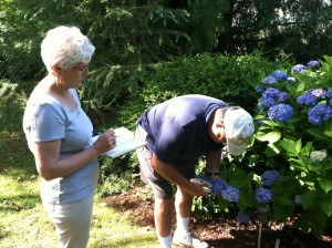 Seven Hydrangea cultivars will be compared at Lewis Ginter Botanical Garden, Virginia Military Institute, and Norfolk Botanical Garden to determine the effect of climate on color intensity of the sepals