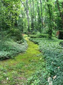 A shady path in Norie Burnet's moss garden, Eden Woods.