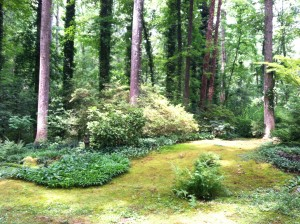 "Norie Burnet selectively allows ""volunteers"" such as this patch of ferns to live amongst the mossy ""lawns."""