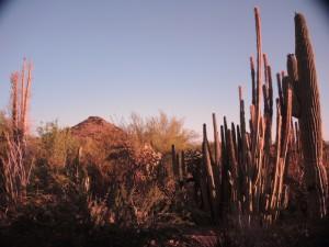 View at the Desert Botanical Garden