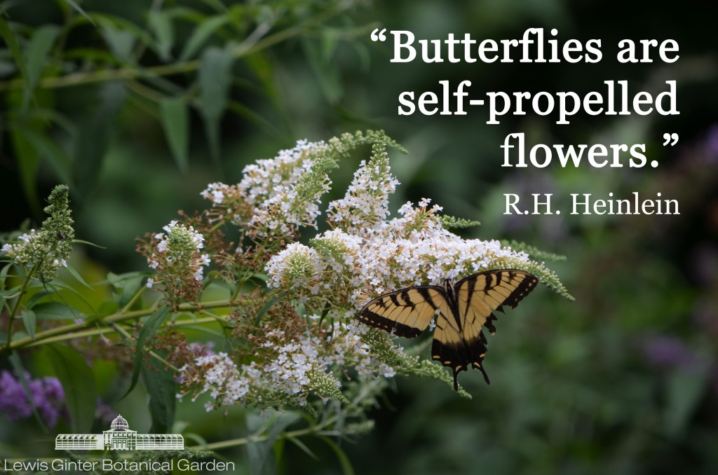 Butterflies are self-propelled flowers