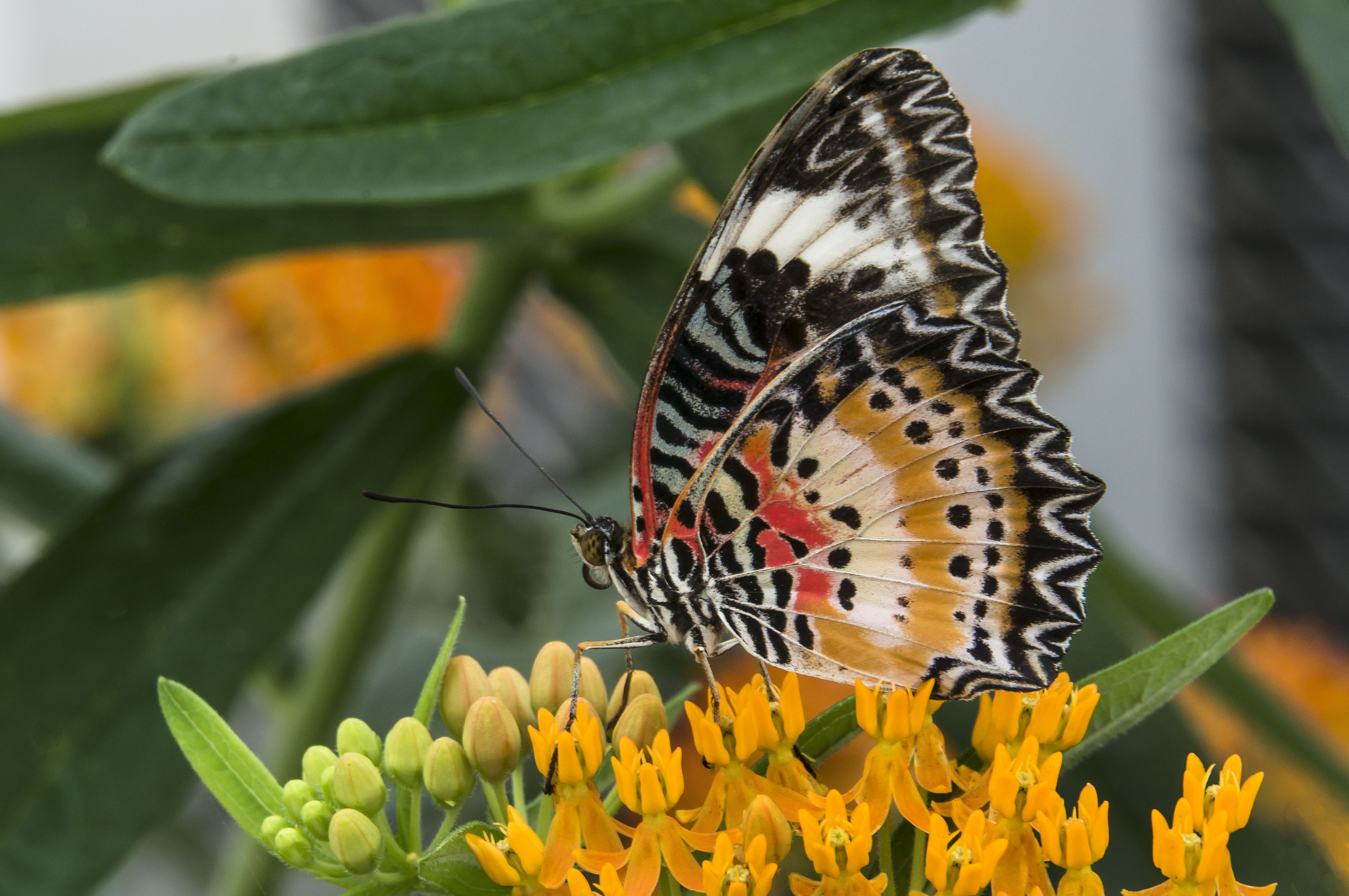 Butterflies Have Scales Really Lewis Ginter Botanical