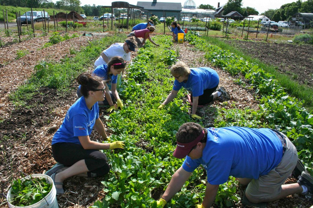 The task of thinning turnip seedlings affords a relaxing opportunity for conversation & team building.